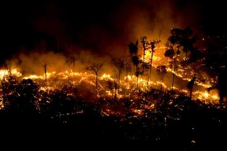 Incêndios criminosos devastam a Amazônia