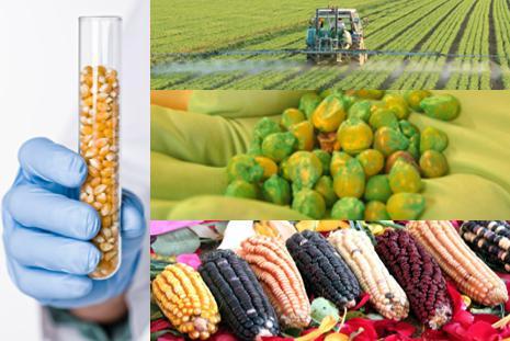 Garantia Safra beneficia mais de 53 mil agricultores na PB