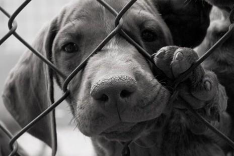 China retira cachorro de lista de animais criados para consumo