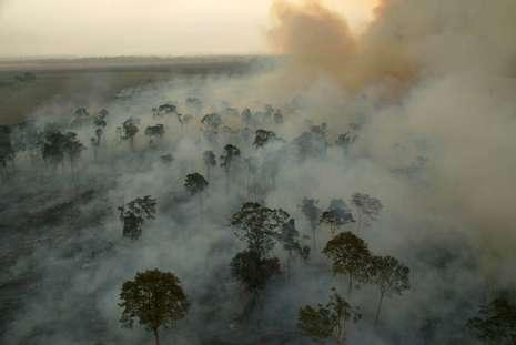 Desmatamento na Amazônia em 2020 pode superar o recorde alcançado em 2019